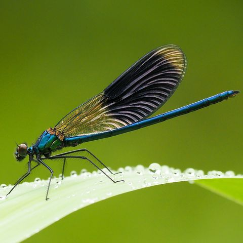 Dragonfly and damselfly spotting